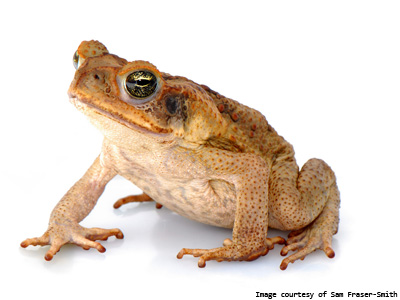 Make sure your press release is a right 'ribbiting' read...