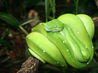 A Python, yesterday.