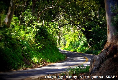 Tantalus Road through Hawaiian jungle - wiki is a Hawaiian word