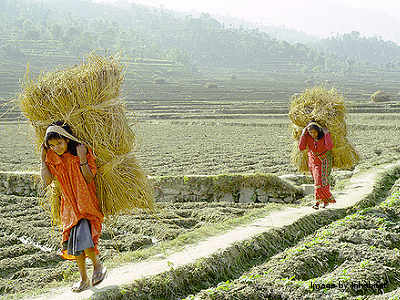 'Girls carrying hay bundles' by Inhabitat (CC-BY-NC-ND)