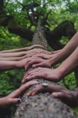 Photo of hands on tree trunk